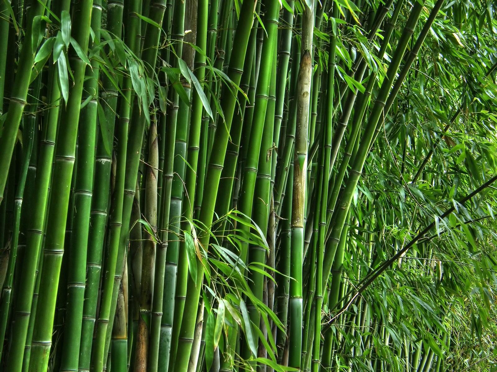 Bamboo on the yoga mat…? – Yoga & Joyful Living